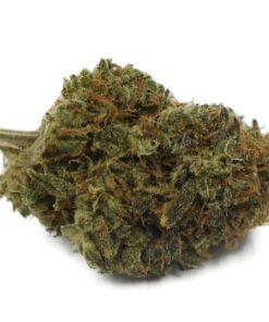gg4 cbd strain-gg4 strain-gg4 weed strain